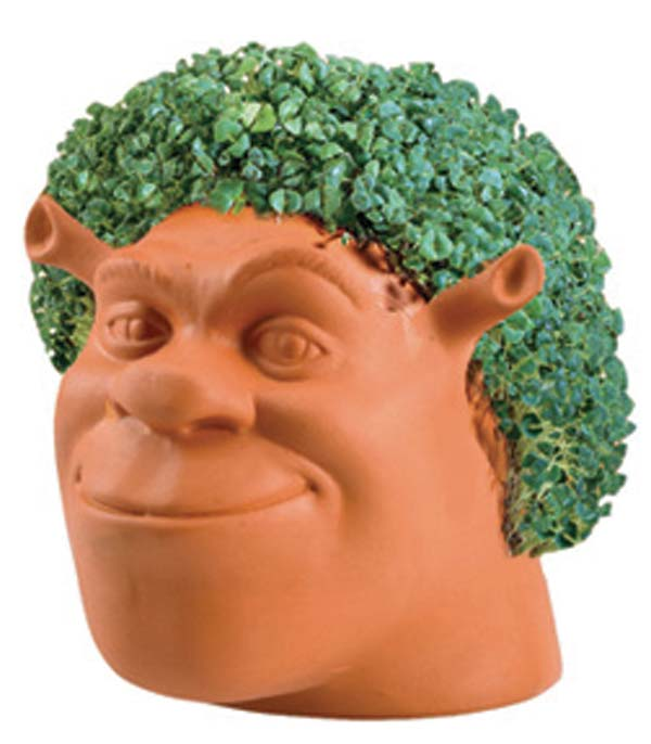 Chia Shrek Colonialmedical Com