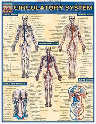 The Circulatory & Respiratory Systems Study Guide - Videos ...
