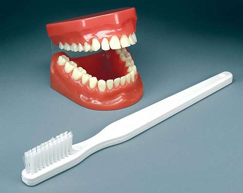 Flossing and Brushing Model